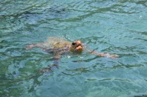 Turtle spotting | Mario's Glass Bottom Cruises | Vasilikos | Zakynthos